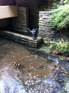 Picasso sculpture at Fallingwater