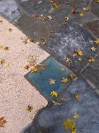 Fall leaves at Fallingwater