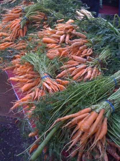 Carrots galore