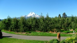 Mt. Hood from Parkdale